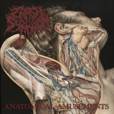 CRASH SYNDROM - Anatomical Amusements - CD